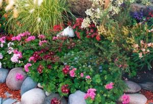 Jardín – Utiliza bien los insecticidas